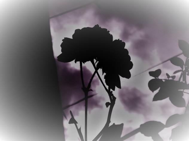 prickedpic.jpg